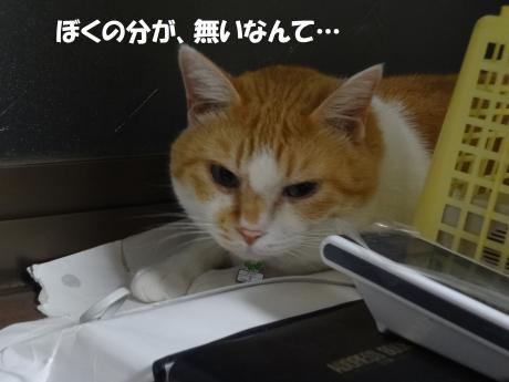 DSC01832縺シ縺上・_convert_20120923101003