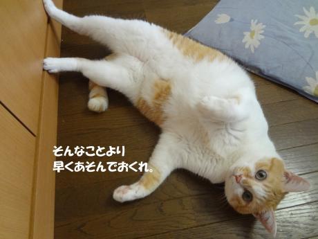 DSC02085縺昴s縺ェ_convert_20120926172408
