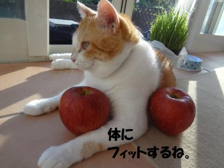 DSC02320繝輔ぅ繝・ヨ_convert_20120927152532