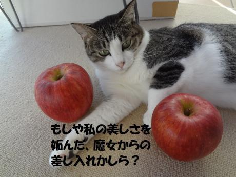 20120927160339c32.jpg