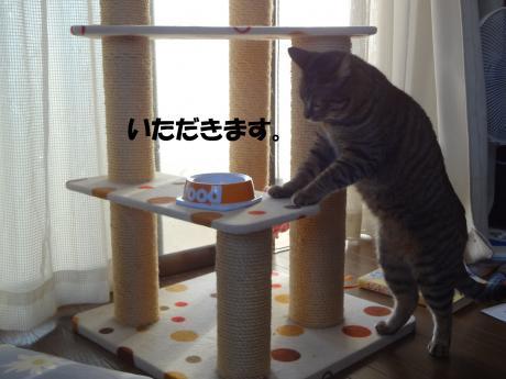 DSC02338縺・◆縺縺阪∪縺兩convert_20120929205342