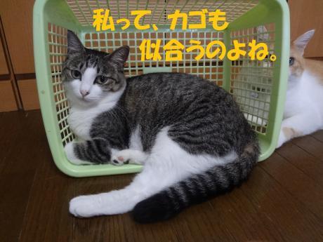 DSC01544_convert_20120824160503.jpg