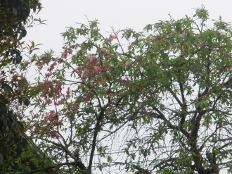ヘキサゴンバック&お花です