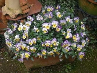 暖かな日のお花たち