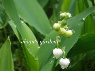 お庭のお花たち&ヘキサゴン