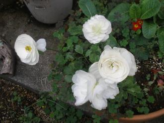 周りのお花たち