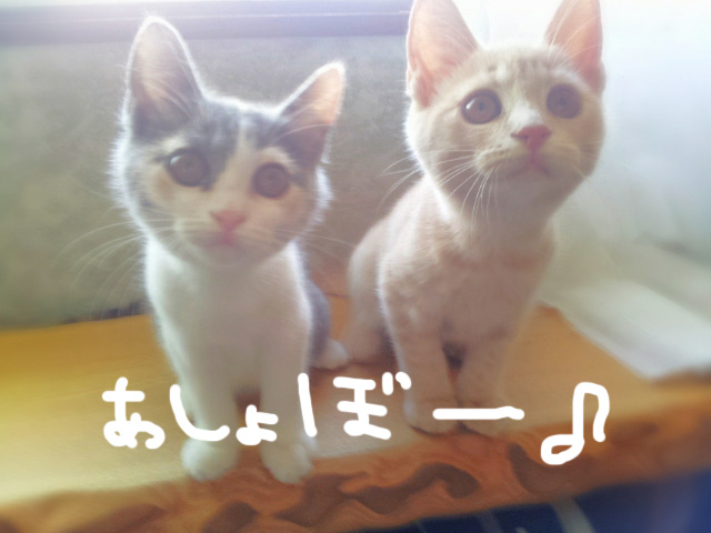 猫好き+京都にお住まいの方にお知らせ