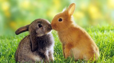kiss-rabbit_convert_20130214021852.jpg