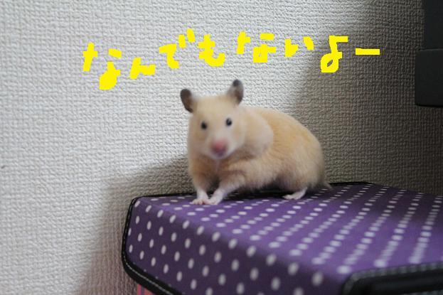 IMG_0425.jpg