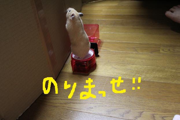 IMG_1351.jpg