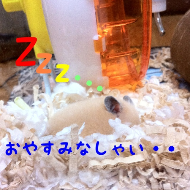 blog_import_4fe01e884ba6e.jpg