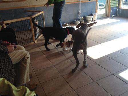 puppyparty11242.jpg