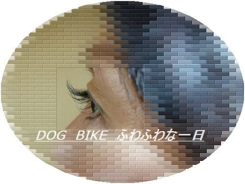 P1080292.jpg