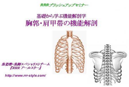 胸郭機能解剖