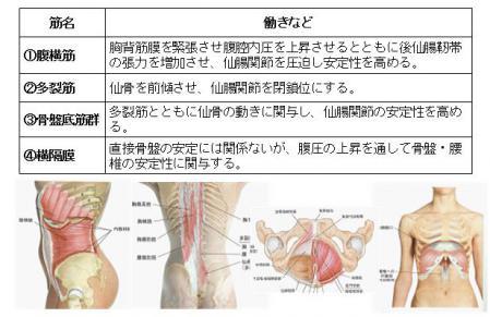 骨盤を安定させる筋システム