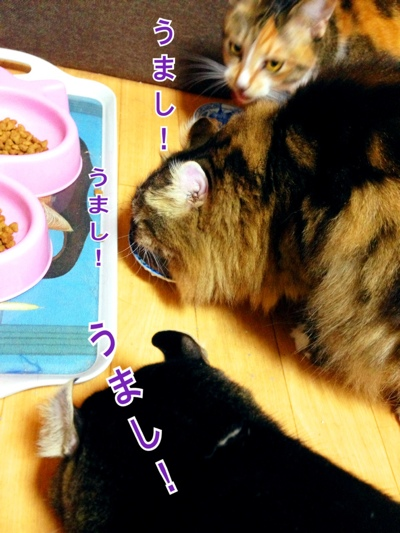 fc2blog_20141204152504a3a.jpg
