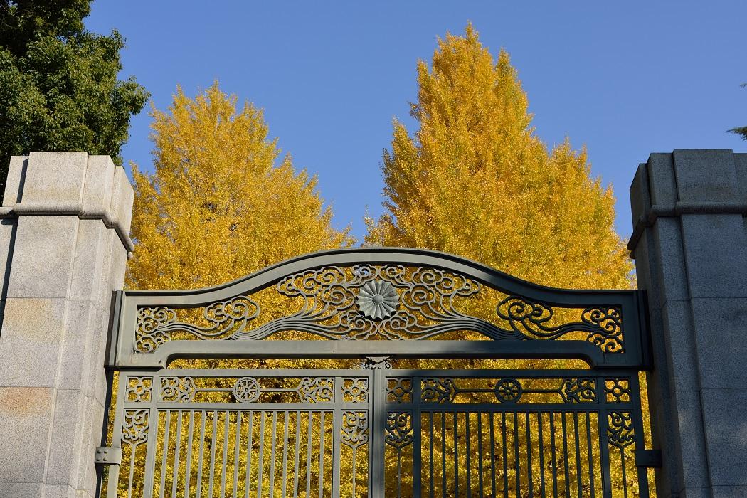 Univ. of Tokyo in Autumn