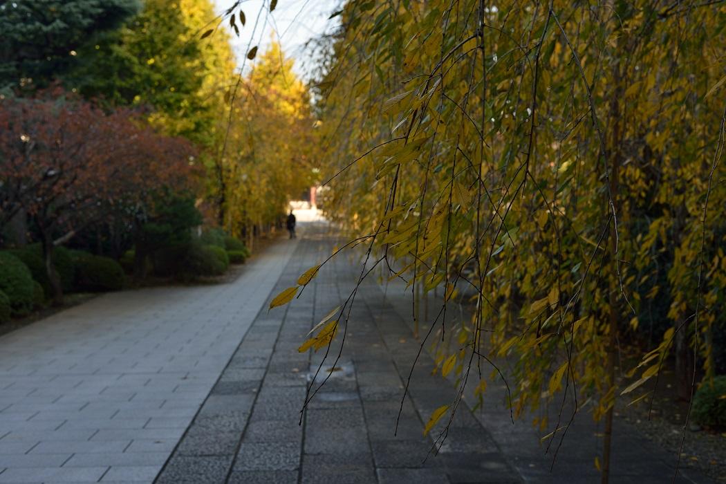 秋を探す都心散策