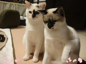 honokanoka-20130331.jpg