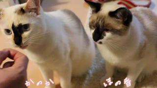 honokanoka-20130405.jpg