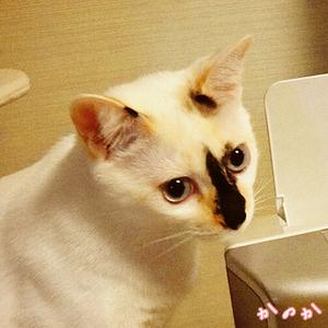 kanoka-20130415.jpg