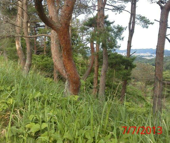 20130707_145041-1.jpg