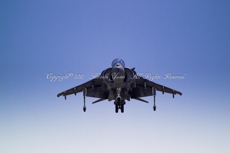 Harrier20120505-_D8F3540.jpg