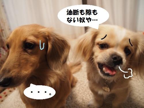 007_convert_20131218221535.jpg