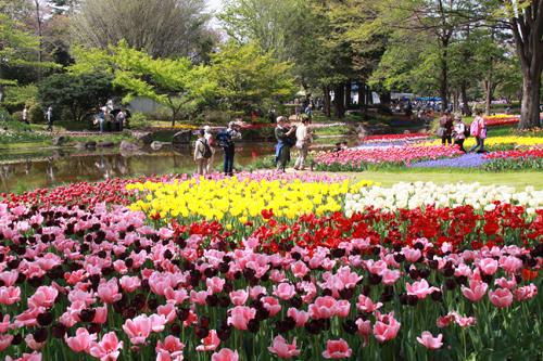 花見客いっぱい