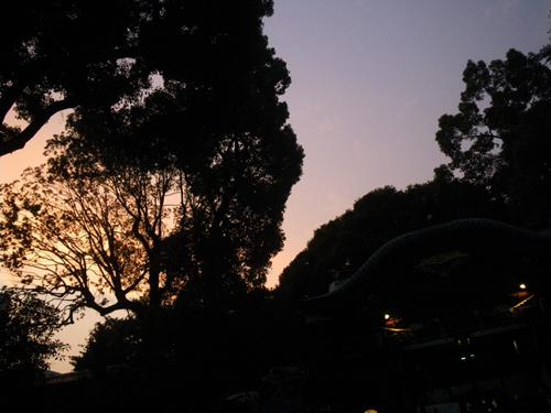 夕暮れの神社の森