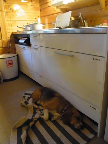 台所仕事中も足元で