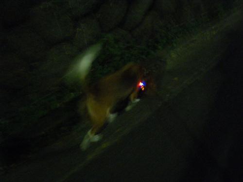 暗闇を歩く