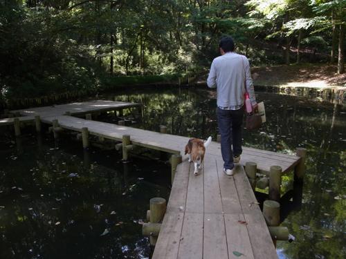 池の木道を歩く