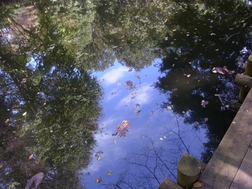 池に写りこむ空と木々