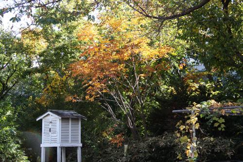 色づいた木々と百葉箱