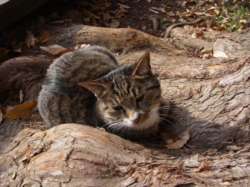 木の根っこの窪みでひなたぼっこの猫