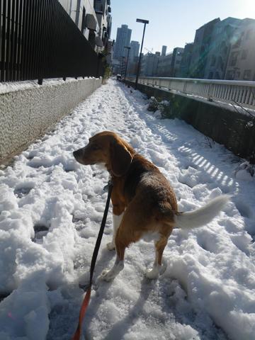 雪のあささんゴー