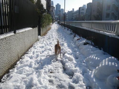 雪のあささん