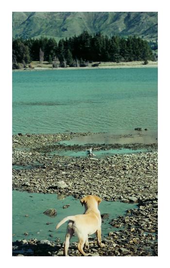 羊の国のラブラドール絵日記シニア!!クロエちゃん幼少時代写真1