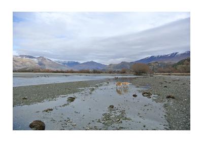 羊の国のラブラドール絵日記シニア!!写真WestWanaka1