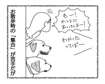 羊の国のラブラドール絵日記シニア!!4コマ漫画「集合と解散」2