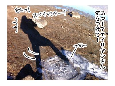 羊の国のラブラドール絵日記シニア!!特別な日のご飯写真4