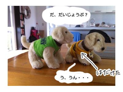 羊の国のラブラドール絵日記シニア!!ワナカ写真日記3