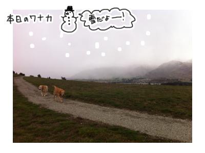 羊の国のラブラドール絵日記シニア!! 一緒すぎ写真4