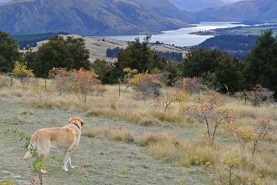 羊の国のラブラドール、Mt.Iron1