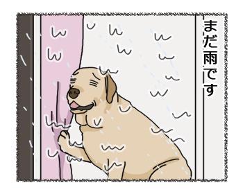 羊の国のラブラドール絵日記シニア!!お散歩貯金3