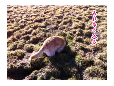 羊の国のラブラドール絵日記シニア!! 写真日記「地球の穴」2