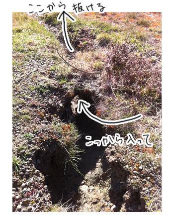 羊の国のラブラドール絵日記シニア!! 写真日記「地球の穴」6