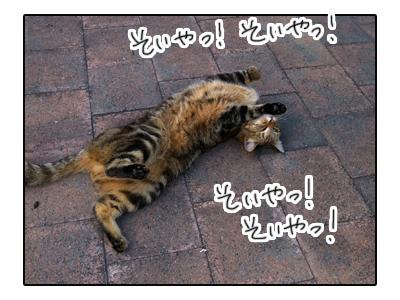 羊の国のラブラドール絵日記シニア!!「夢の生活」写真日記5