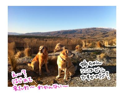 羊の国のラブラドール絵日記シニア、エビスと旅するニュージーランド「Mt.Difficulty3」